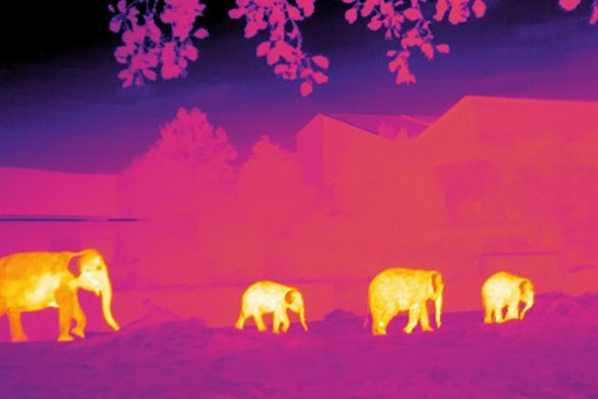 How Do You Count Endangered Species? Look to the Stars